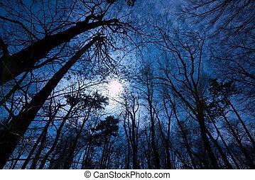 sötét, erdő
