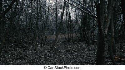 sötét, gyalogló, lassú, erdő
