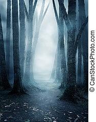 sötét, titokzatos, erdő, ködös