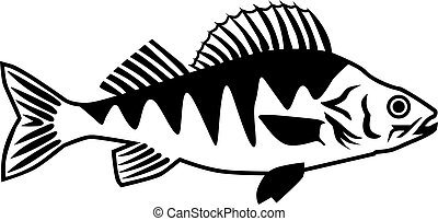 sügér, fish