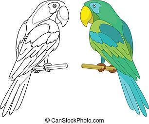 sügér, madár, papagáj