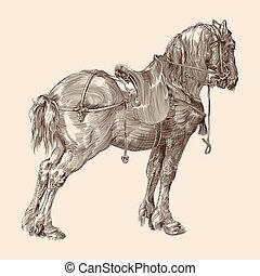saddle., ló