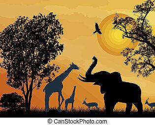 safari., kicsapongó élet