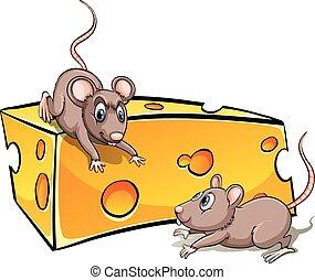 sajt, szelet, a francba
