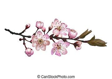 sakura, háttér, menstruáció