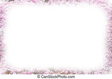 sakura, menstruáció, háttér, cseresznye, keret, kivirul, rózsaszínű, gyönyörű, fénykép