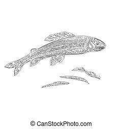 salmonidae, szüret, bevés, pisztráng