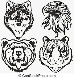 sas, állhatatos, hord, tiger, vektor, farkas, jel