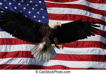 sas, amerikai, kopasz, lobogó, leszállás
