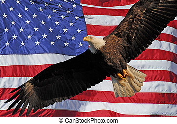 sas, amerikai, kopasz, lobogó