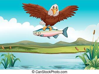 sas, fish, fertőző, tó