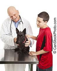 scotty, törődik, kutya, állatot megvizsgál