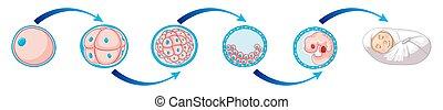 sejt, ábra, newborn csecsemő