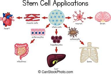 sejt, alkalmazásokat, ábra, szár