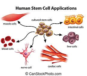 sejt, alkalmazásokat, emberi, szár