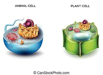 sejt, berendezés, állat
