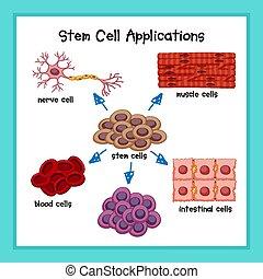 sejt, tudományos, szár, alkalmazásokat, ábra orvosi