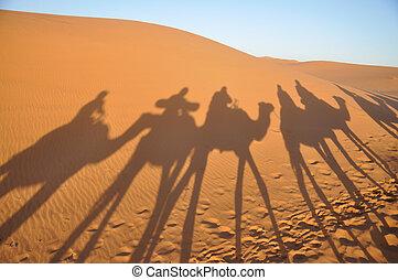 shadows, merzouga, marokkó, tevék, sahara cserbenhagy