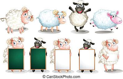 sheep, állhatatos