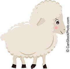 sheep, csinos, kevés, elszigetelt, ábra, háttér, vektor, fehér, karikatúra