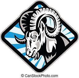 sheep, döngöl, goat, kanadai vadjuh