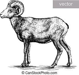 sheep, elszigetelt, ábra, bevés
