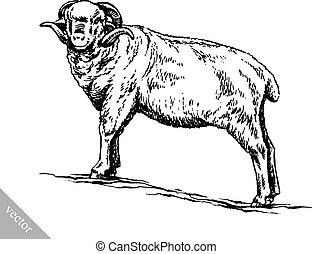 sheep, rajzol, bevés, ábra, tinta