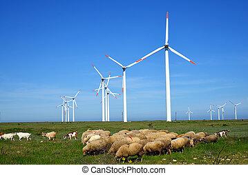 sheep, turbines, ellen, döngöl, mező, felteker