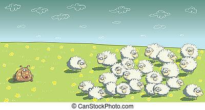 sheepdog, sheep, falka