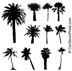 silhouettes., szerkeszt, gyűjtés, vektor, pálma fa, könnyen, size., bármilyen