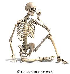 skeleton., helyesbít, darabka, felett, anatómiai, vakolás, út, white hím, árnyék, 3