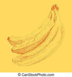 skicc, étrend, ábra, vektor, bevésett, banán