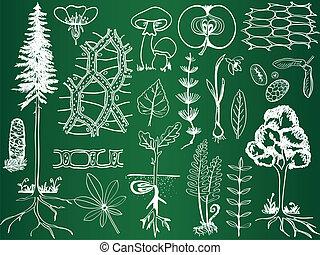 skicc, botanika, biológia, izbogis, -, berendezés, ábra, bizottság
