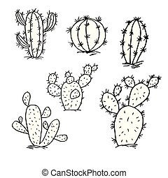 skicc, kaktusz, állhatatos