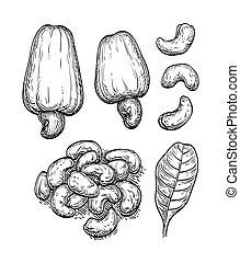 skicc, nuts., tinta