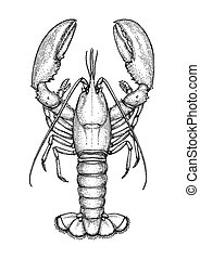 skicc, tinta, lobster.