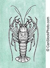 skicc, tinta, tüskés, lobster.