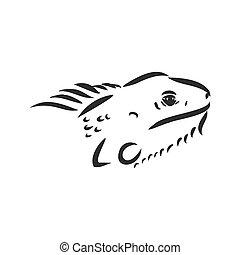 skicc, vektor, vector., megtérít, kéz, húzott, iguana., ábra, iguana