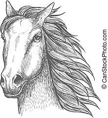 skicc, versenyló, csődör, ló, téma, versenyzés