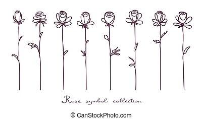 skicc, virág, rózsa, elszigetelt, gyűjtés, roses., háttér, fehér
