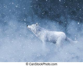 snow., vakolás, farkas, méltóságteljes, fehér, 3