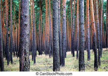 sok, sóvárog fa, bitófák, motívum, párhuzamos