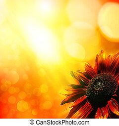 sunflower., elvont, természetes, háttér