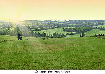 sunshine., reggel, mező, friss, korán, farmer