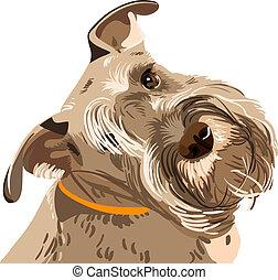 szálkásszőrű német pincsi, fajta, kutya, kisméretű, vektor, closeup