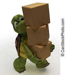 szállítás, csomagolás, kartondoboz, teknősbéka, karikatúra