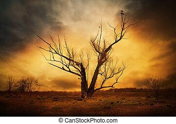 száraz, fa ág, kukorékol