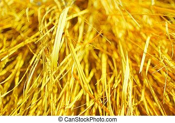 száraz, háttér., fű, sárga
