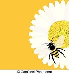 százszorszép, virág, háttér, méh