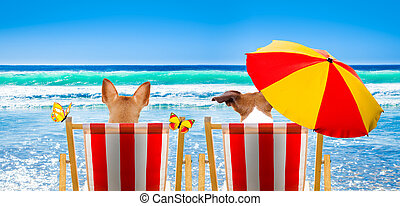 szék, tengerpart, kutya, bágyasztó
